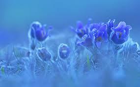 blaue