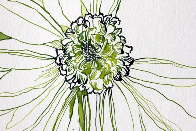Entstehung Gerbera - 25 x 25 cm - Tusche auf Hahnemuehle Aquarellkarton (c) Zeichnung von Susanne Haun